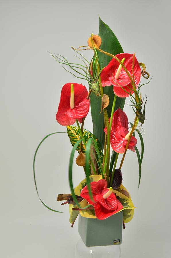 fleuriste-montpellier-juvignac-DSC_0056