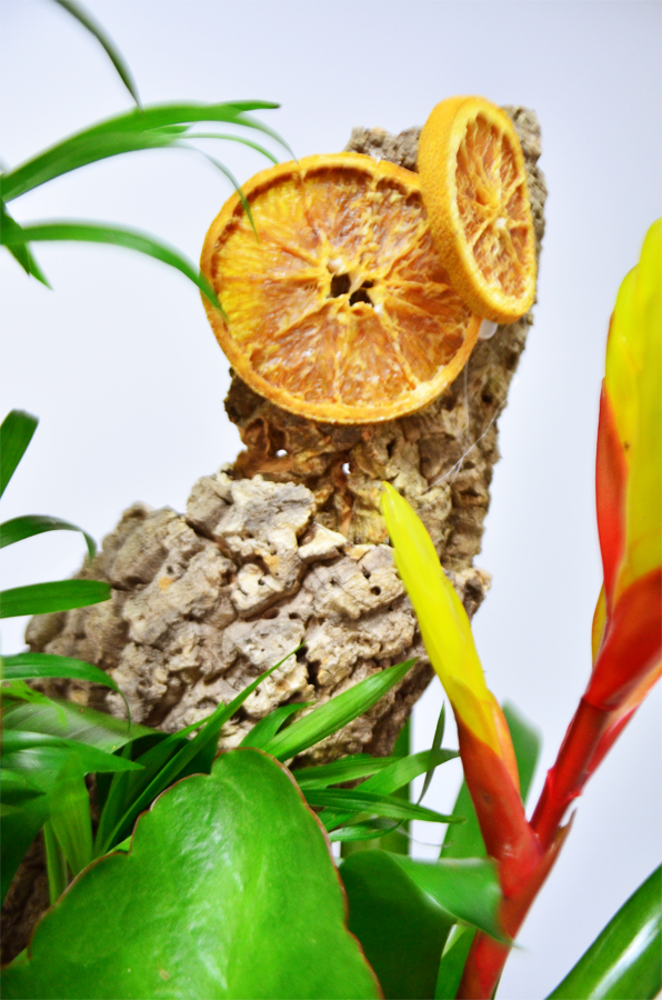 fleuriste-montpellier-juvignac-DSC_0880-W