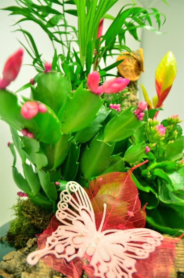 fleuriste-montpellier-juvignac-DSC_0881-W
