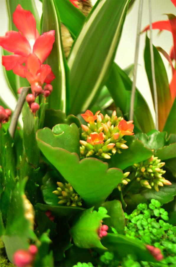 fleuriste-montpellier-juvignac-DSC_0889-W