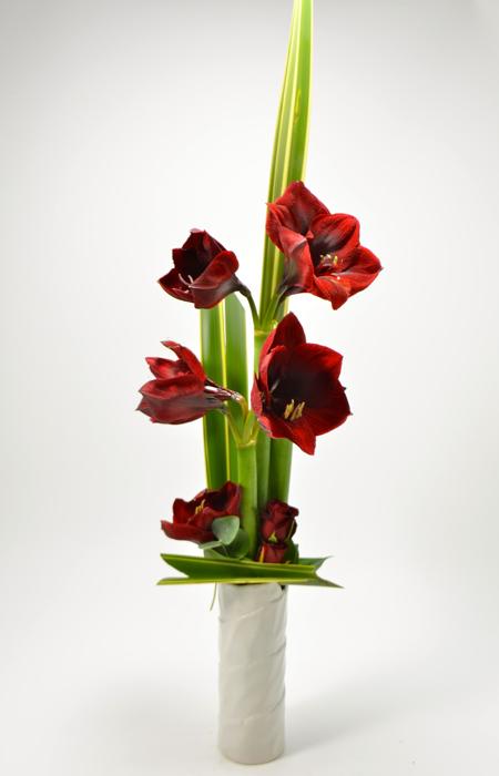 fleuriste-montpellier-juvignac-amaryllis2