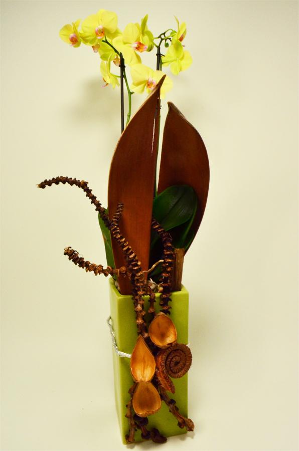 fleuriste-montpellier-juvignac-orchidee-jaune