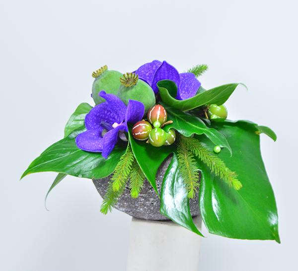 fleuriste-montpellier-juvignac-orchidee-vanda