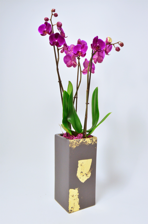 fleuriste-montpellier-juvignac-orchidee-vase-decoration