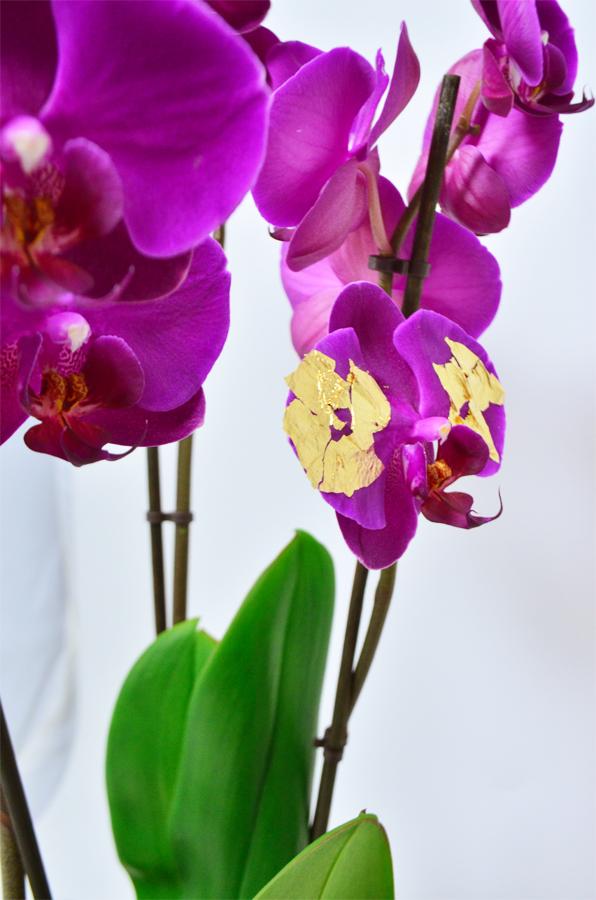 fleuriste-montpellier-juvignac-orchidee