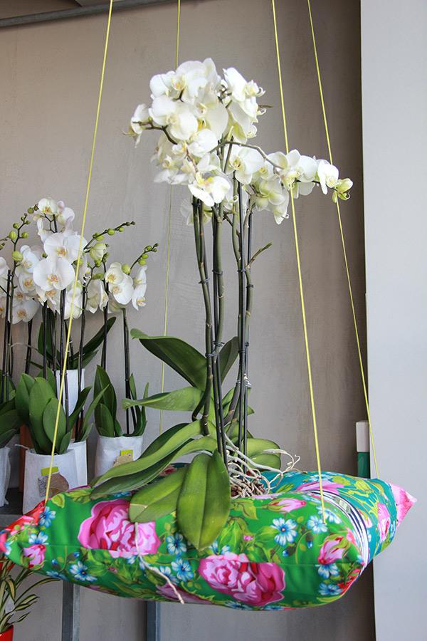 orchidée blanche sur coussin de couleurs