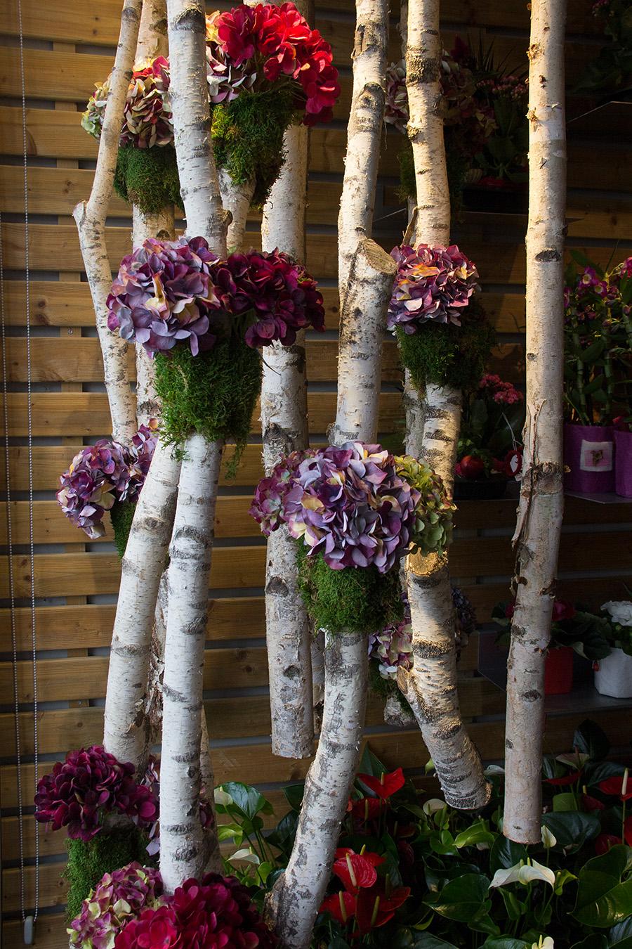 symphonie-florale-automne-hortensias