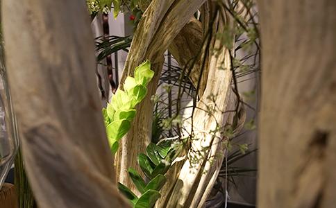 les lianes en bois exotique naturel montpellier symphonie florale