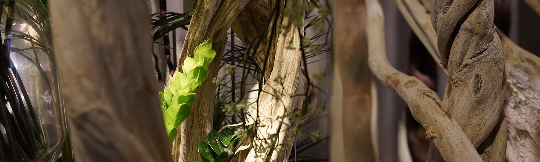 les-lianes-en-bois-naturel-exotique-montpellier-symphonie-florale-juvignac