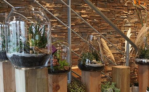 les terrarium montpellier symphonie florale