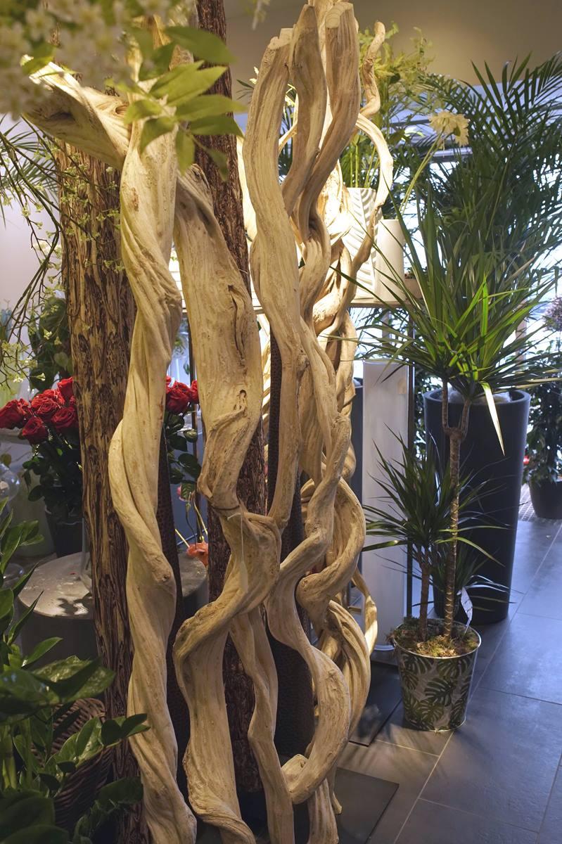 lianes-bois naturel exotique montpellier
