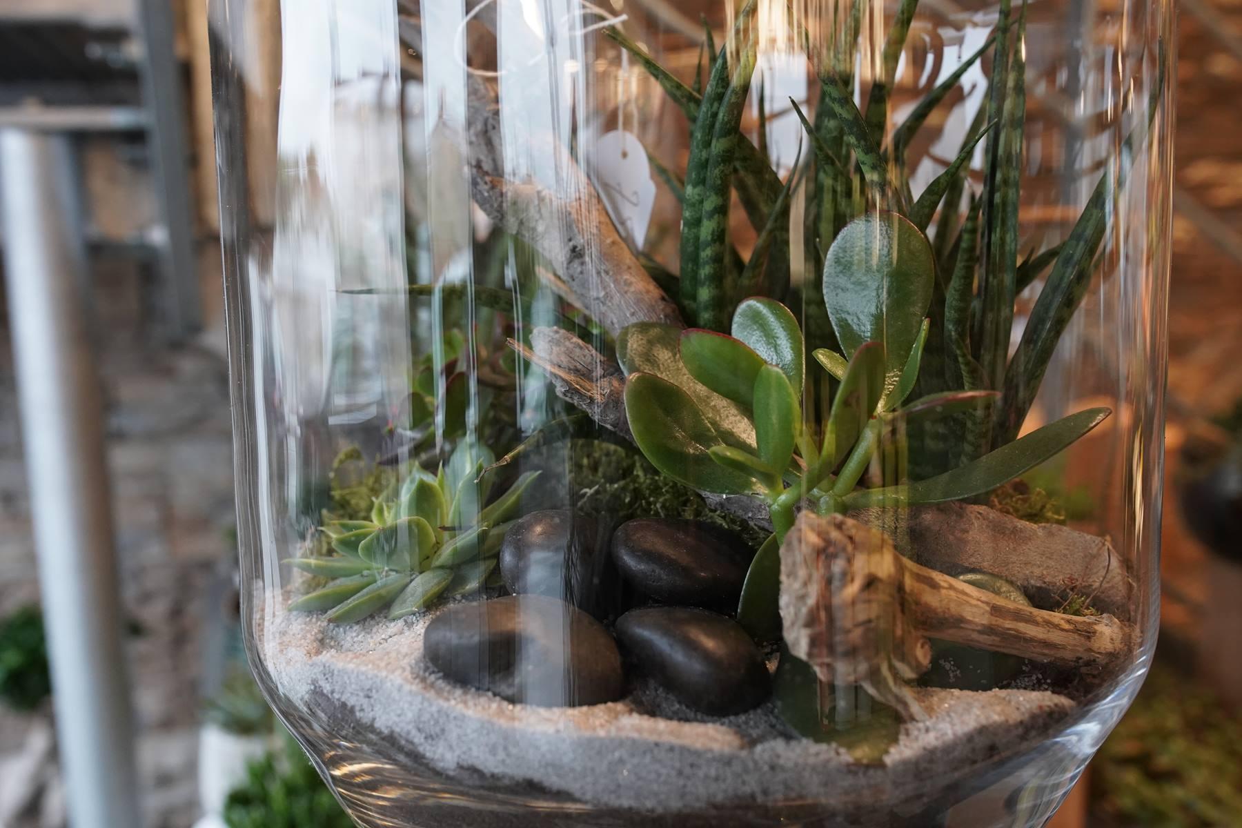 terrarium-montpellier-decoration-interieur-juvignac-symphonie-florale