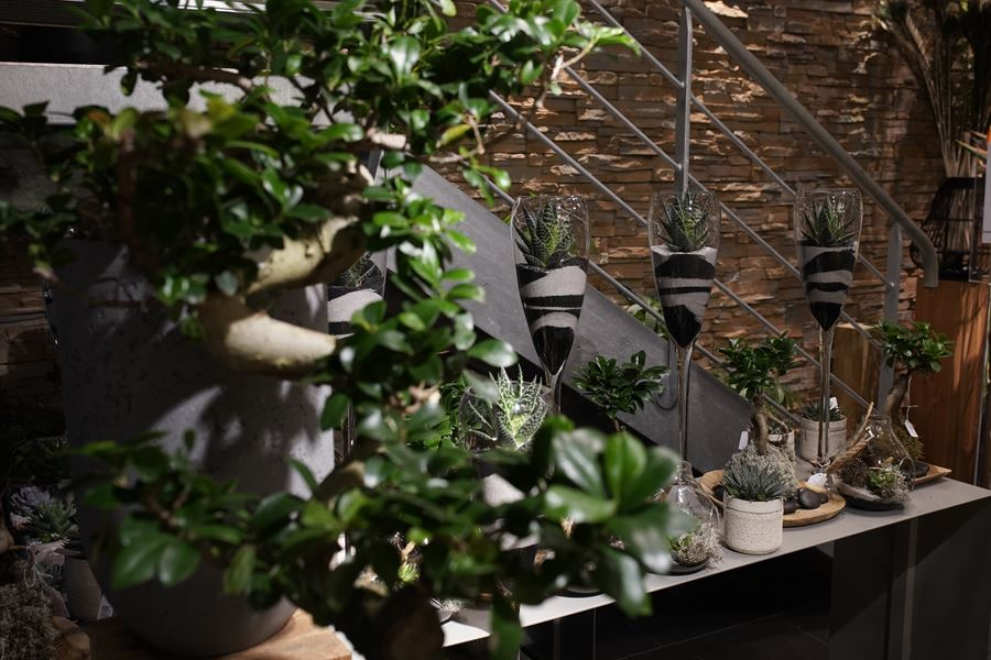 fleuriste-saussan-plantes-grasses-symphonie-florale (10)