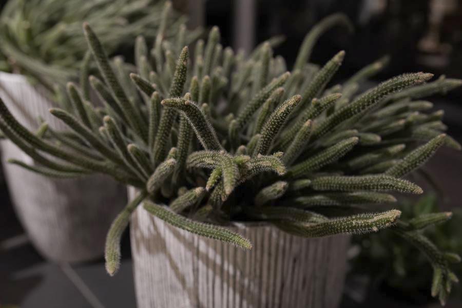 fleuriste-saussan-plantes-grasses-symphonie-florale (13)