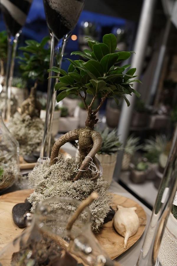 fleuriste-saussan-plantes-grasses-symphonie-florale (5)