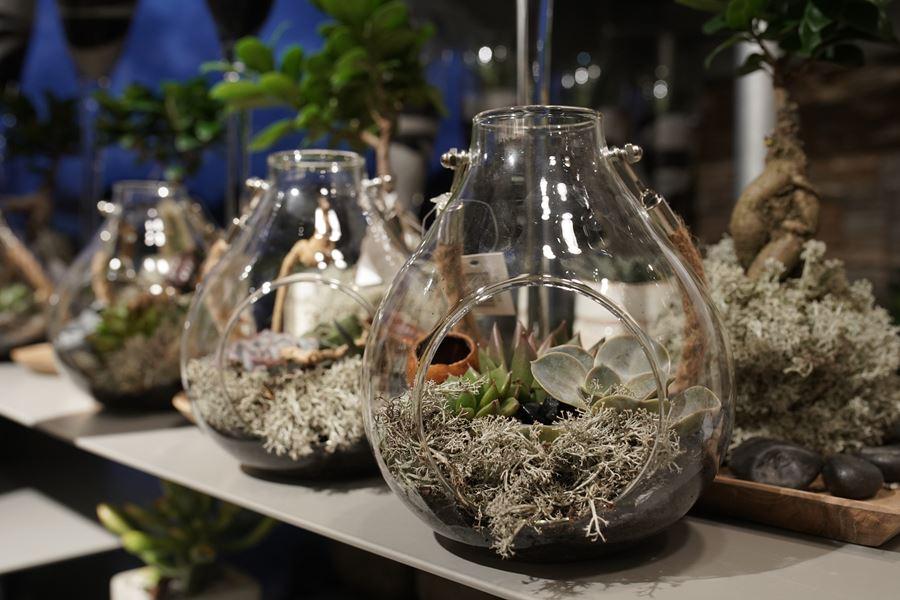 fleuriste-saussan-plantes-grasses-symphonie-florale (8)