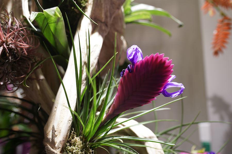 fleuriste-saussan-symphonie-florale (1)