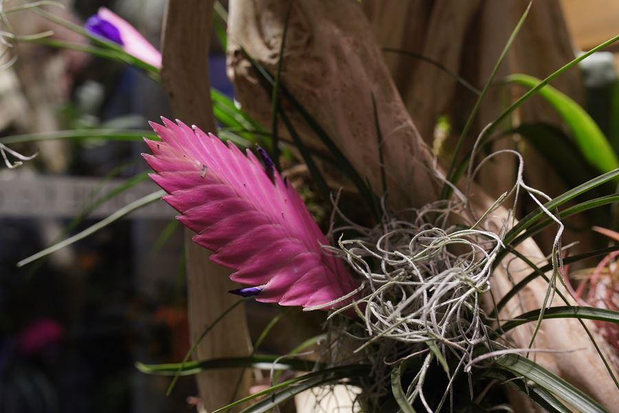 fleuriste-saussan-symphonie-florale (11)