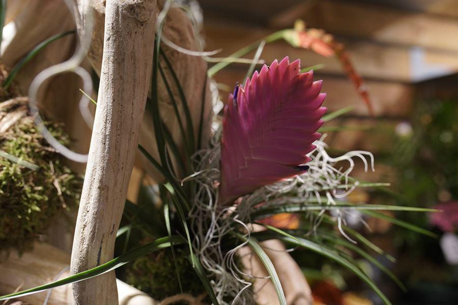 fleuriste-saussan-symphonie-florale (3)