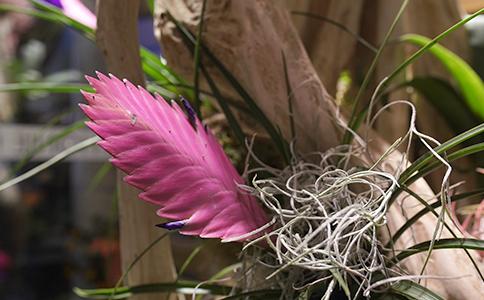 fleuriste-saussan-tillandsias-symphonie-florale