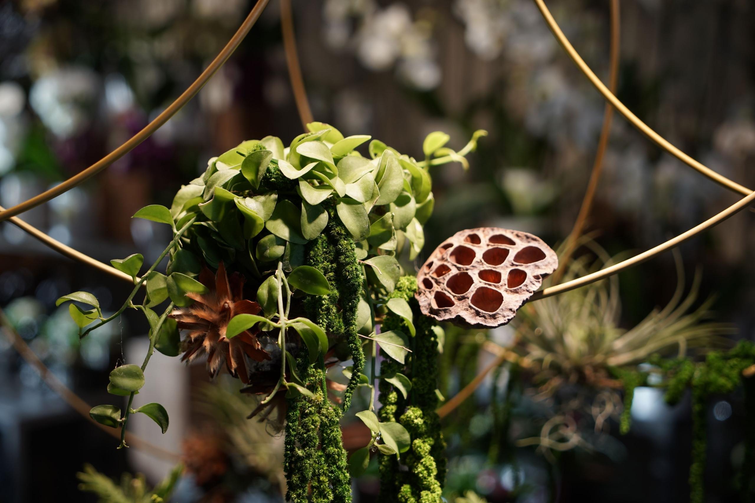 symphonie-florale-tillandsia