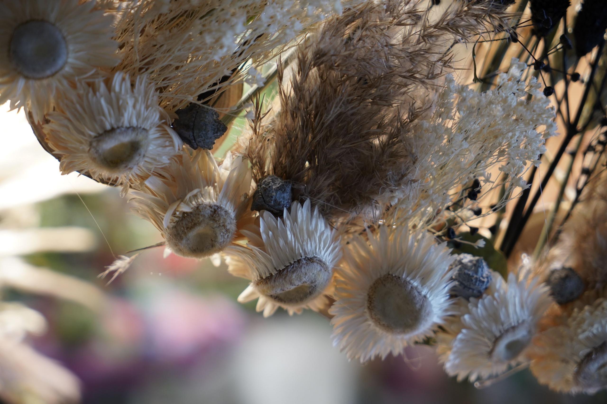 attrapes-reves-printaniers-symphonie-florale